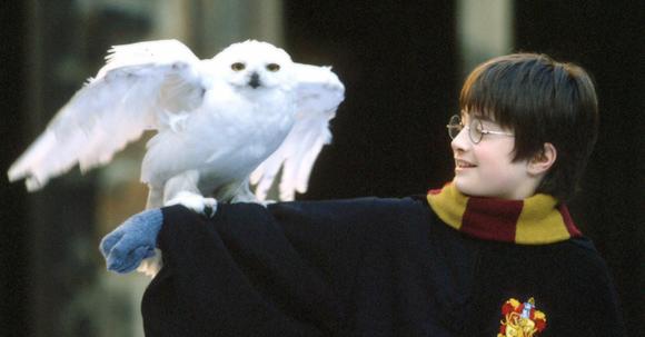 hedwig_owl
